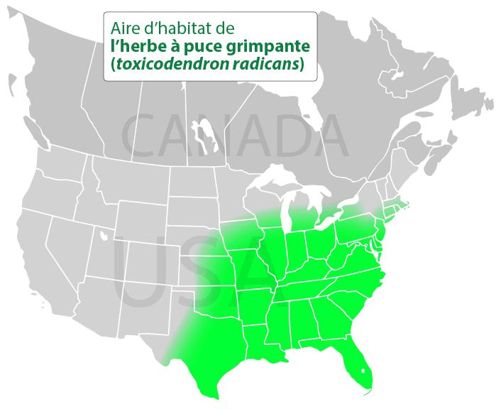 Aire d'habitat de l'herbe à la puce grimpante (toxicodendron radicans)