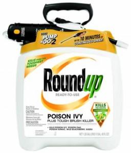 Le RoundUp pour l'herbe à la puce est un herbicide chimique à base de glyphosate.